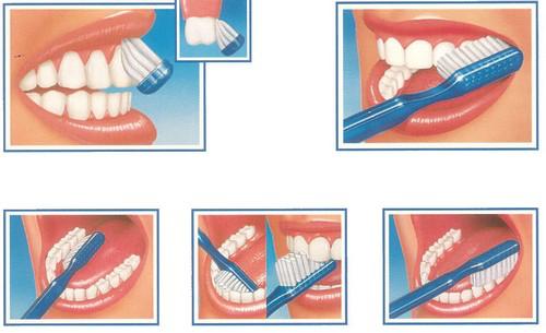 cuidado dental en casa, cepillado